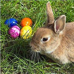Frohe Ostern und schöne Ferien!